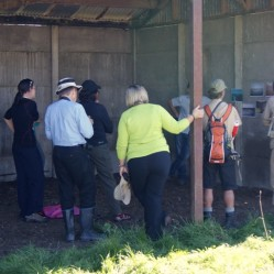 Barn Consultation